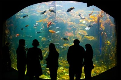 The Best Nightlife in San Francisco, at the California Academy of Sciences? http://www.Pacific-Coast-Highway-Travel.com/Best-Nightlife-in-San-Francisco.html