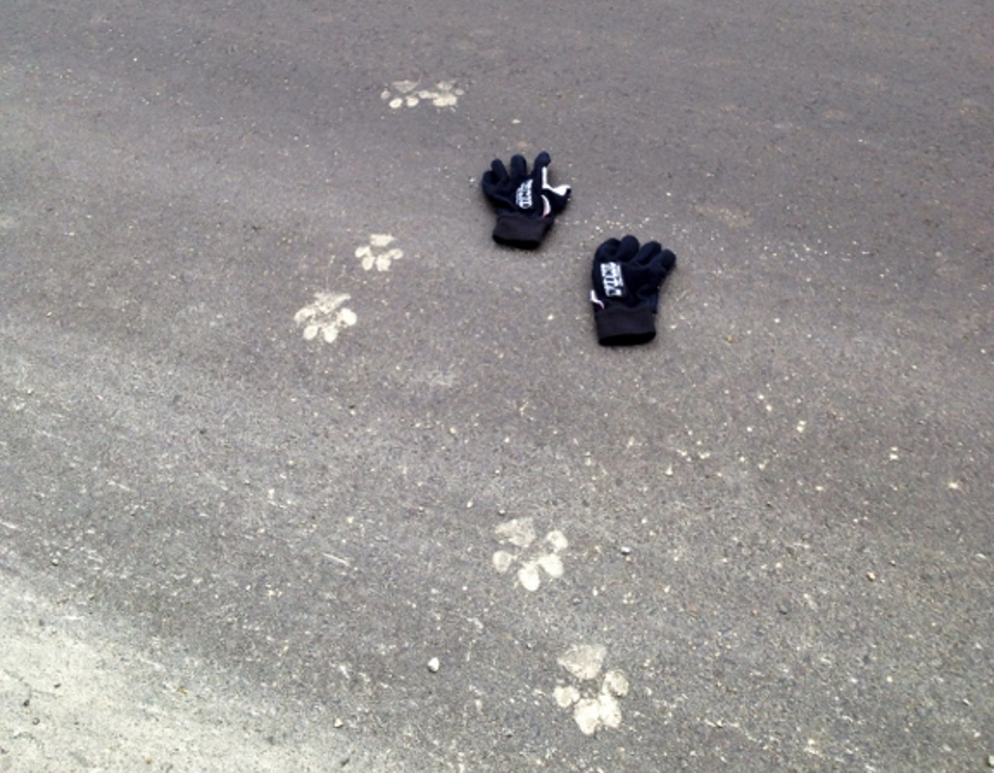 Fresh Cougar Prints Near the Author's Tent
