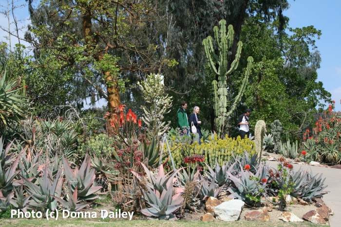 The Cactus Garden in Balboa Park, San Diego, California