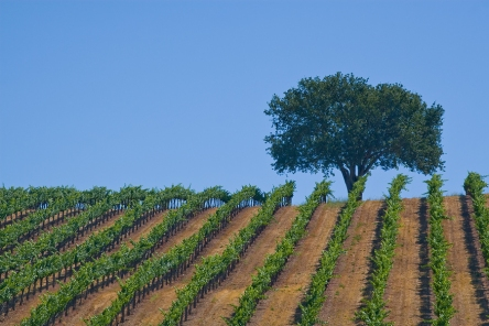 Monterey Wine Country, pinned from https://www.pacific-coast-highway-travel.com/Monterey-Wine-Country.html