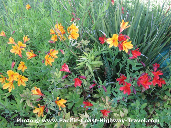 Gardens of the pacific coast highway in california oregon washington heres a list of gardens along the west coast of the usa which are on or near the pacific coast highway the worst driving diversions youll have to make publicscrutiny Image collections