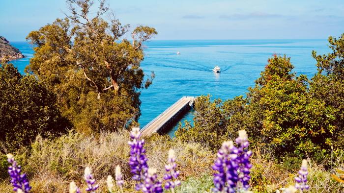 Santa Cruz Island in the Channel Islands National Park.
