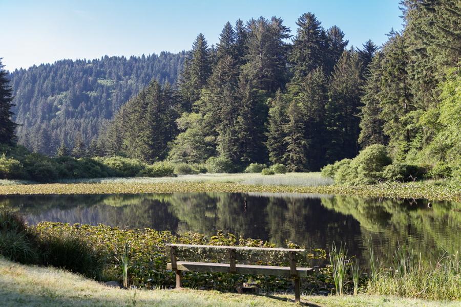 Del Norte Coast Redwoods State Park in California