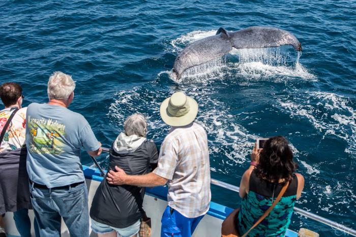 Best Whale Watching Newport Beach