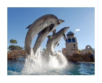 Dolphins leaping at SeaWorld San Diego in California: https://www.pacific-coast-highway-travel.com/SeaWorld-San-Diego.html