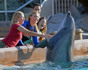 Dolphin encounter at SeaWorld San Diego in California: http://www.pacific-coast-highway-travel.com/SeaWorld-San-Diego.html