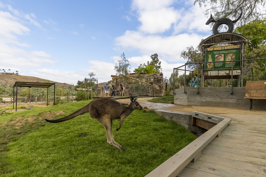 Walkabout Australia at the San Diego Zoo Safari Park