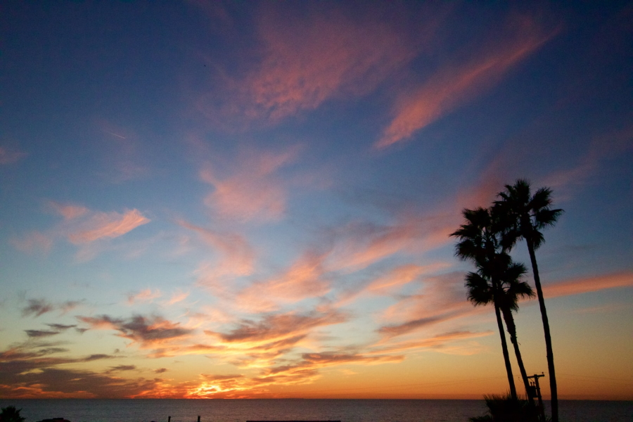 Palm Trees at Sunset in Encinitas