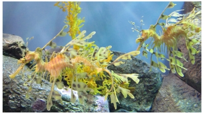 Monterey Bay Aquarium photo (c) Donna Dailey, pinned from http://www.pacific-coast-highway-travel.com/Monterey-Bay-Aquarium.html