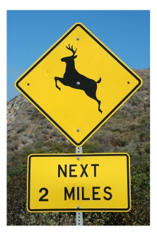Watch out for Deer on the Pacific Coast Highway