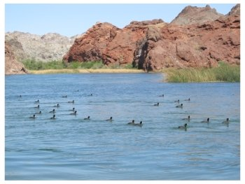 On the Colorado River at Pirate's Cove Resort near Needles in California, photo (c) Donna Dailey from http://www.pacific-coast-highway-travel.com/Colorado-River-Rides.html