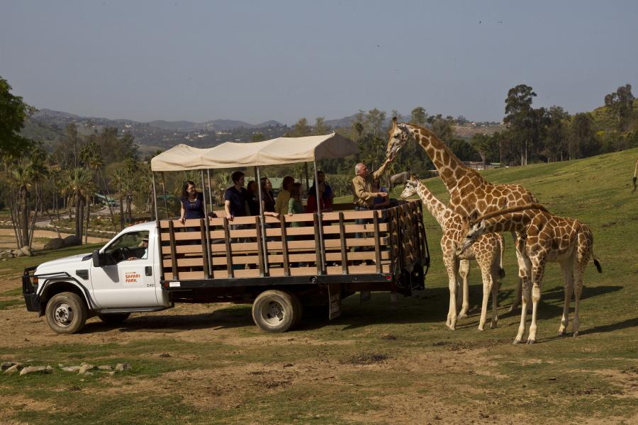 Feeding giraffes at the San Diego Zoo Safari Park