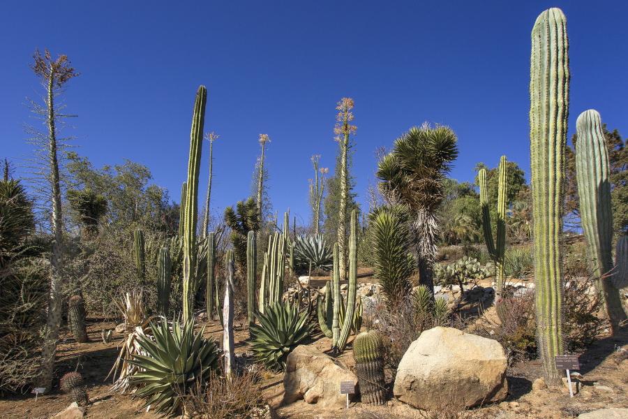 The California Nativescapes Garden at the San Diego Zoo Safari Park