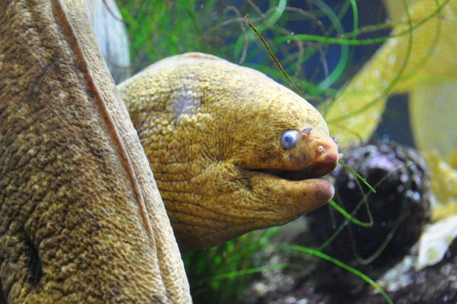 A moray eel in the Heal the Bay Aquarium on Santa Monica Pier