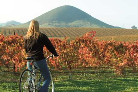 Vineyard in San Luis Obispo on the Pacific Coast Highway