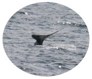 Whale Tail in San Diego, photo by Donna Dailey