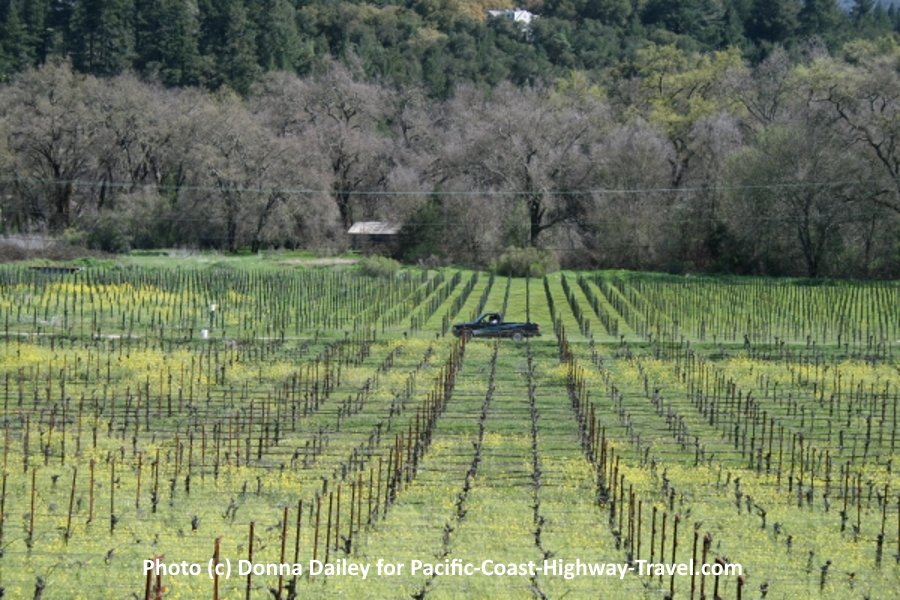 View of Vineyards from Napa's Wine Country Inn