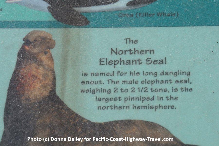 Sign at Elephant Seals Beach California