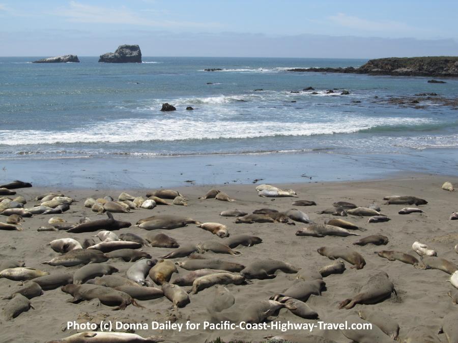 Elephant Seals Beach California