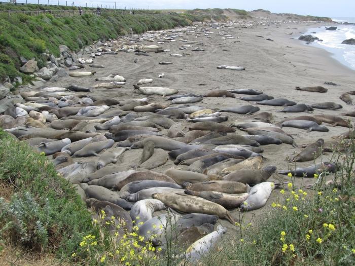 Piedras Blancas Beach